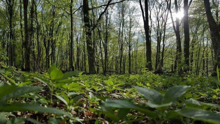 Bos natuur