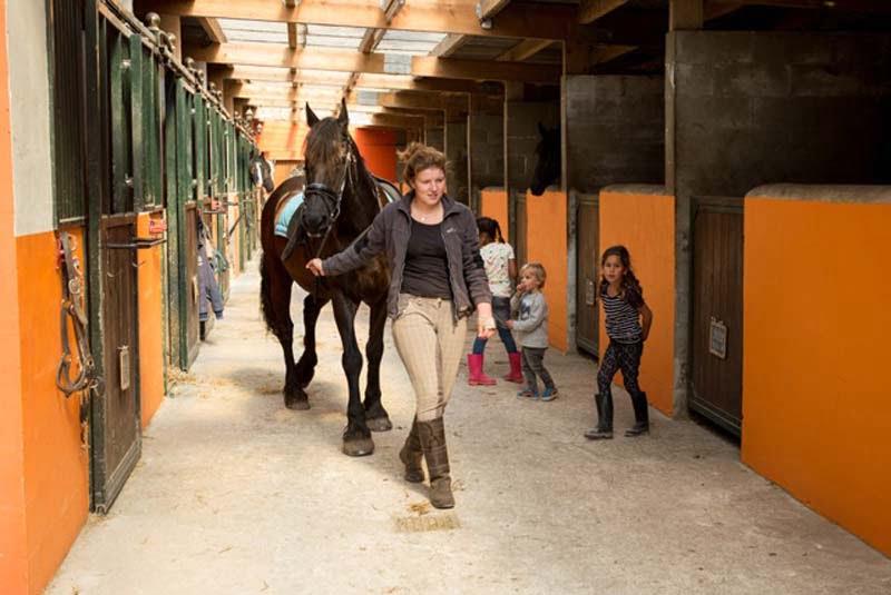 Activiteit paarden
