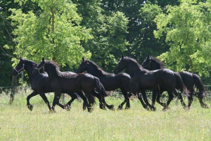 Paarden omgeving