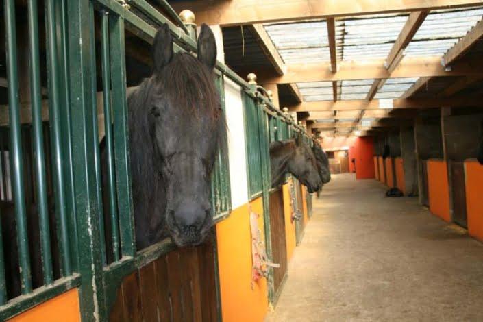 Paardenmanege