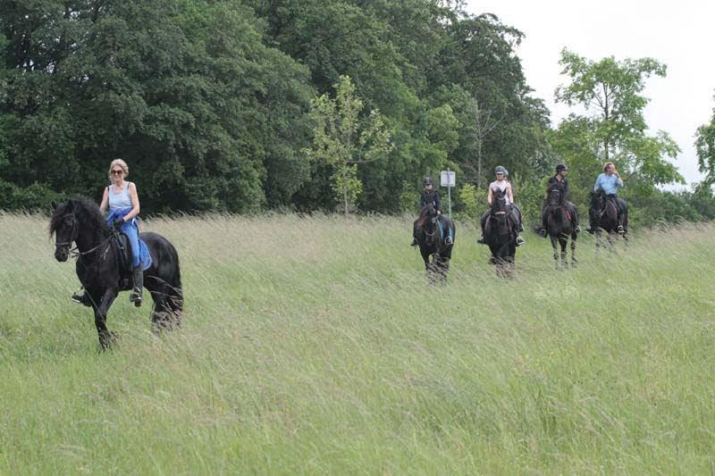 Rit met paarden