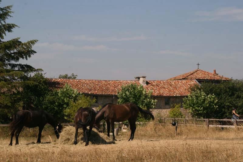 Klooster met wei