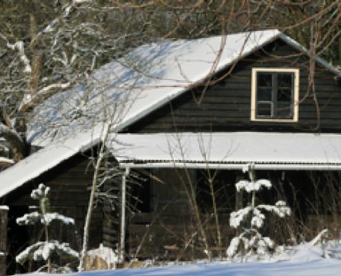 Zwarte stal in winter
